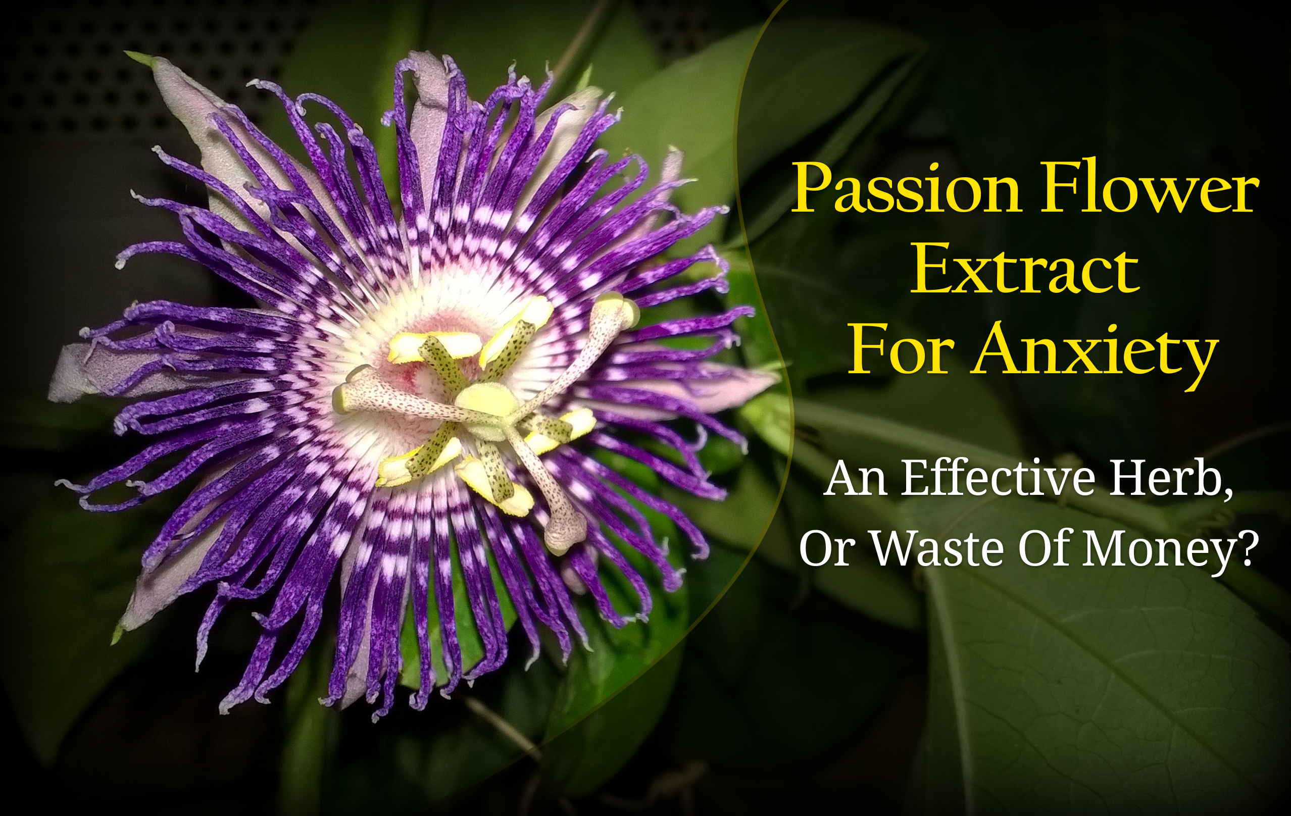 passion-flower-anxiety