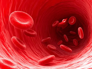 red-blood-cells swimming-in-a-blood-vain