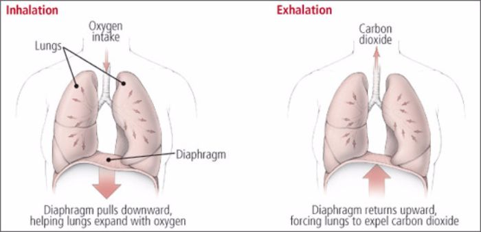 diaphramatic-breathing-for-activation-of-parasympathetic-nervous-system