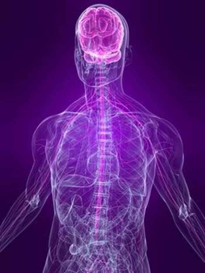 human-nervous-system